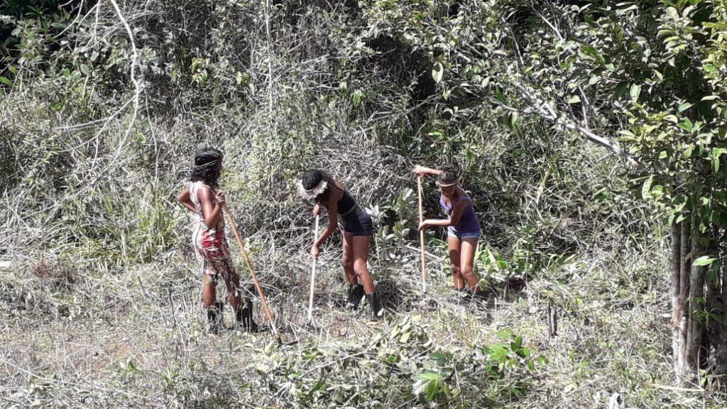 Mulheres tupinambá limpando a área onde construirão a agrofloresta na Aldeia Tukun em Ilhéus.