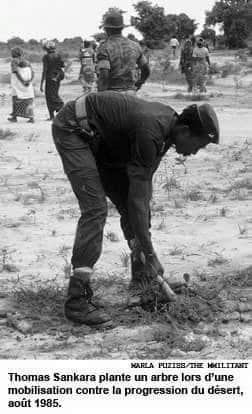 Thomas Sankara, revolucionário de Burkina Fasso, plantando contra a desertificação do Sahel.
